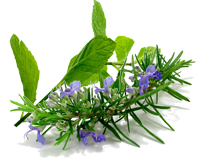 Scent of the Month - Rosemary Mint-